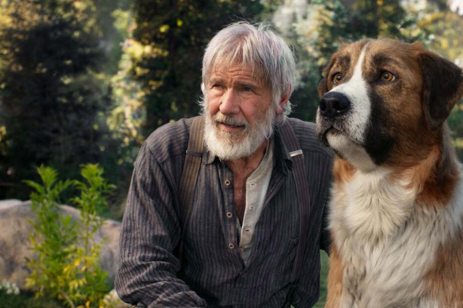 """""""Ruf der Wildnis"""" stellt nicht Harrison Ford, sondern einen Hund in den Fokus!"""