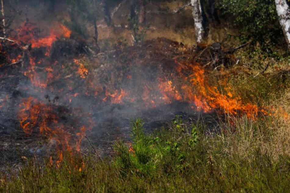Bei einem der gelegten Feuer brannten 200 Quadratmeter ab (Symbolfoto).