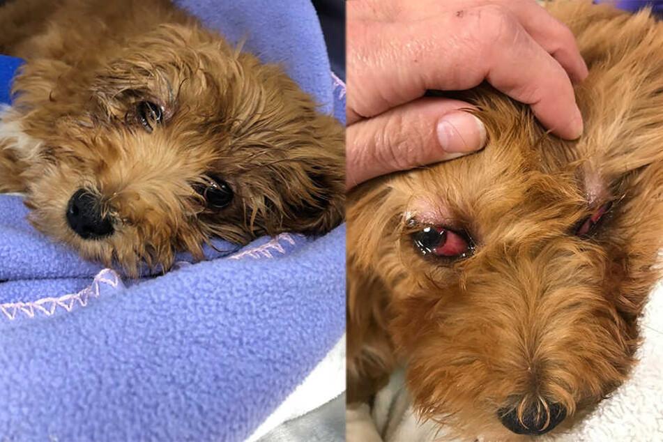Bella wurde schwer verletzt.