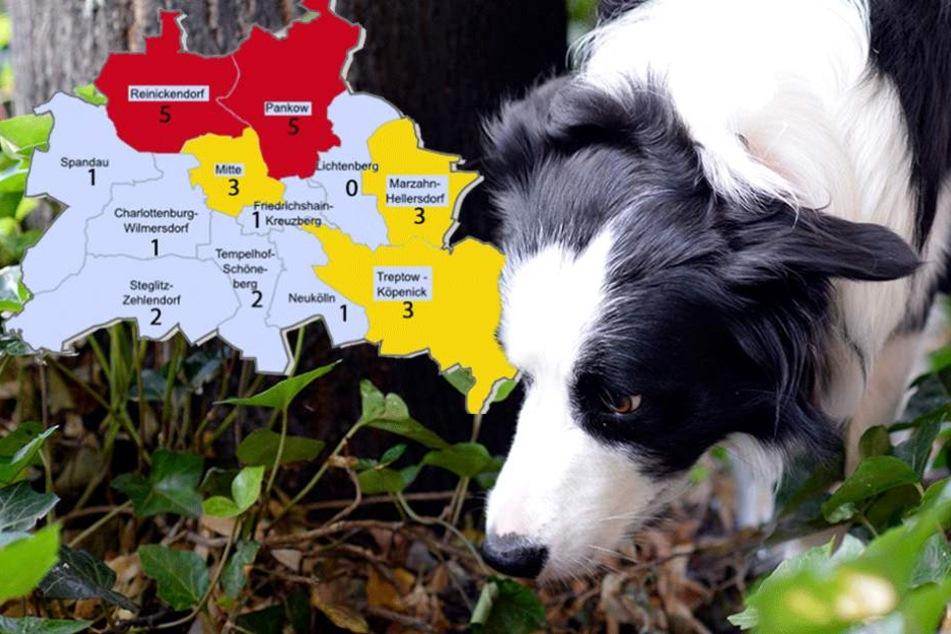 Die Gift-Karte von Berlin: Hier leben unsere Hunde am gefährlichsten