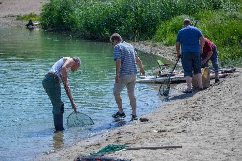 Der Anglerverein versucht die überlebenden Fische zu retten.