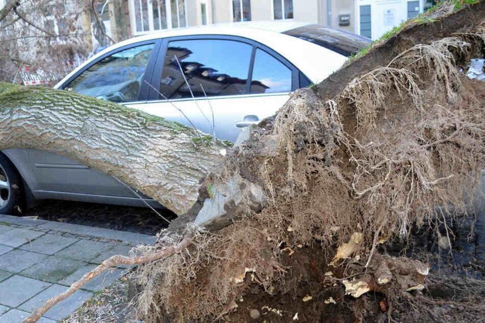 Unter einem umgestürzten Baum wurde die Panzerfaust gefunden. (Symbolbild)