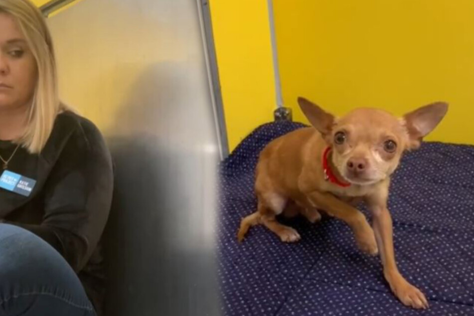 Traumatized dog shakes with fear, but shelter volunteer knows just what to do