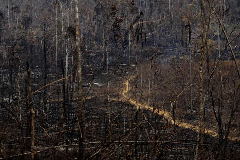 Die brasilianische Regierung setzt nun Soldaten bei den Löscharbeiten und der Verfolgung von Brandstiftern ein.