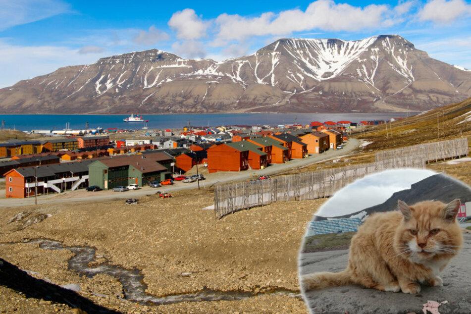 Auf dieser norwegischen Insel sind Katzen verboten, mit einer Ausnahme