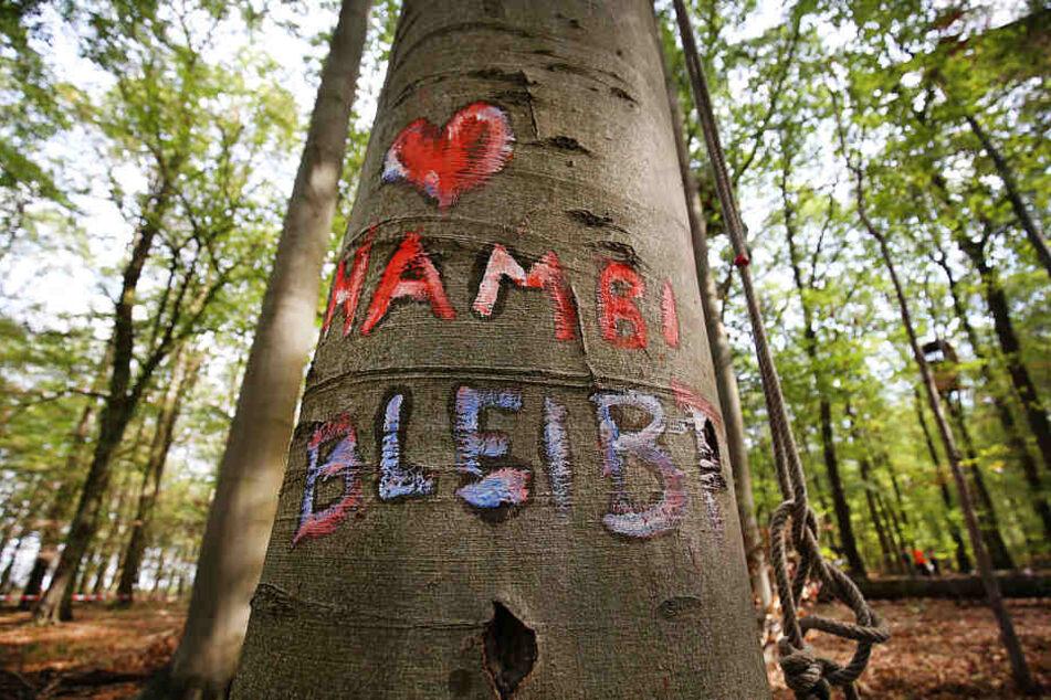 Der Hambacher Forst wird bis Frühjahr 2020 nicht gerodet werden.