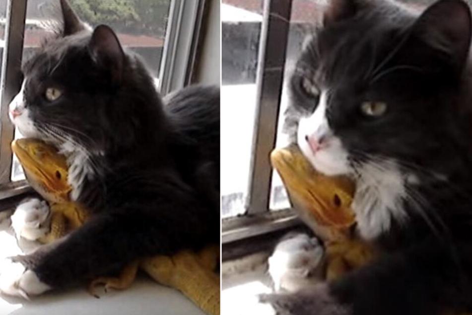Schwitzkasten? Ihr glaubt nie, welche Kreatur diese Katze umarmt!