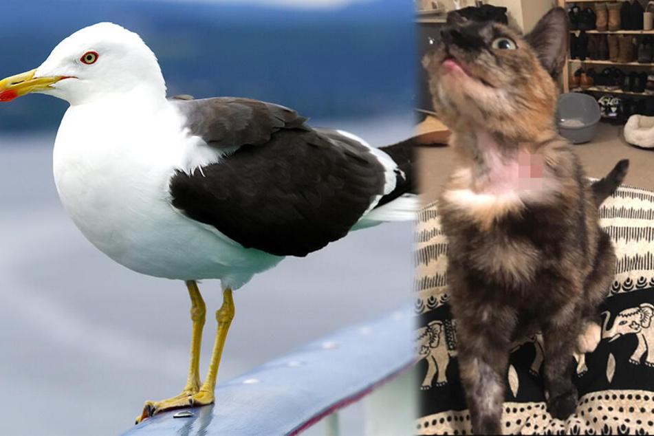 Möwe zerreißt Zunge von Hauskatze in zwei Hälften