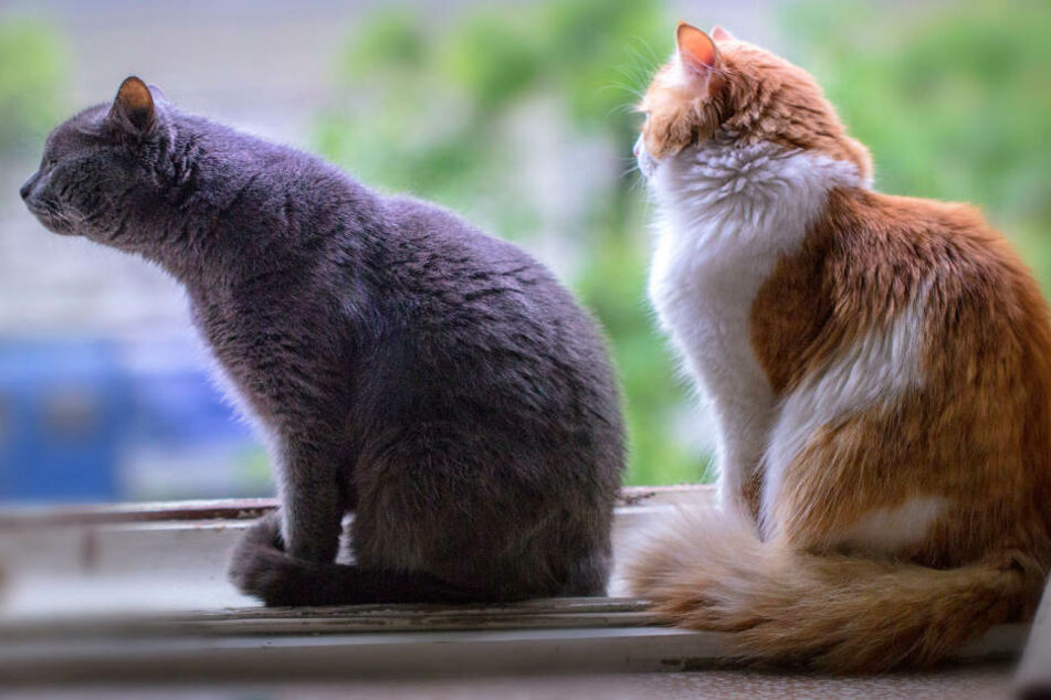 Die Katzen hatten laut dem Ehepaar Sehnsucht nach draußen. (Symbolbild)