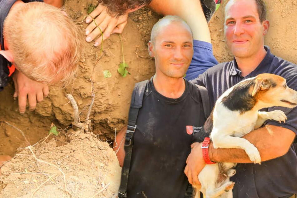 Dramatische Rettungsaktion: Feuerwehr rettet hilflosen Hund aus Dachsbau