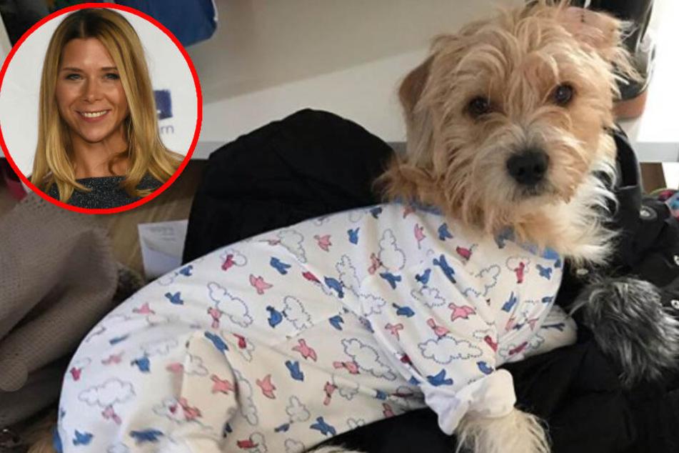 Tanja Szewczenkos Hund Guido hatte eine OP und trägt deswegen Strampler.