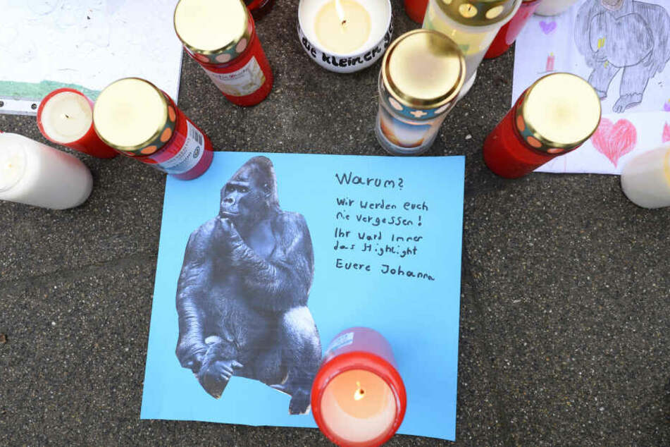 Bei dem Brand starben rund 30 Tiere, darunter zwei Gorilla.