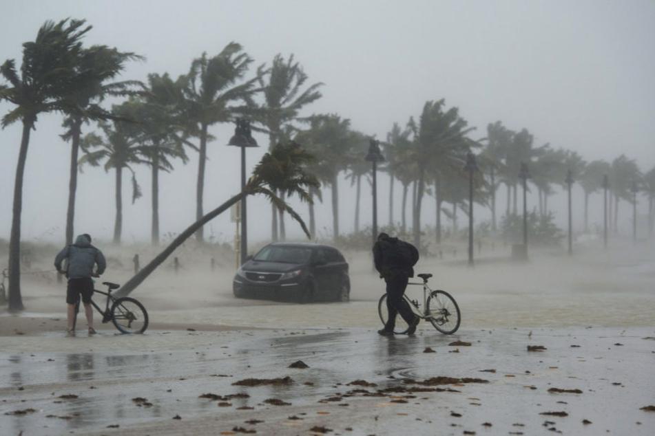 """""""Irma"""" knickte Palmen um, wie Streichhölzer"""