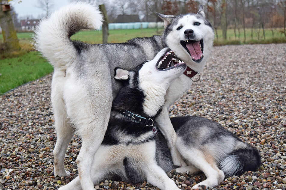 Mit ihrem Hundekumpel kann Tonka (stehend) ausgelassen toben.