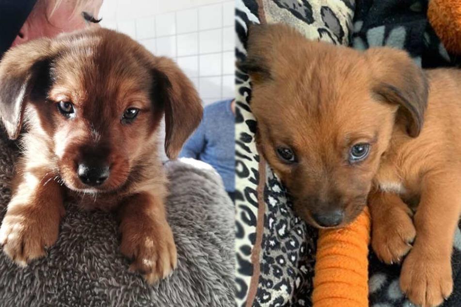 Herzlos: Süße Hundewelpen Snoopy und Balu nach dem Fest ausgesetzt