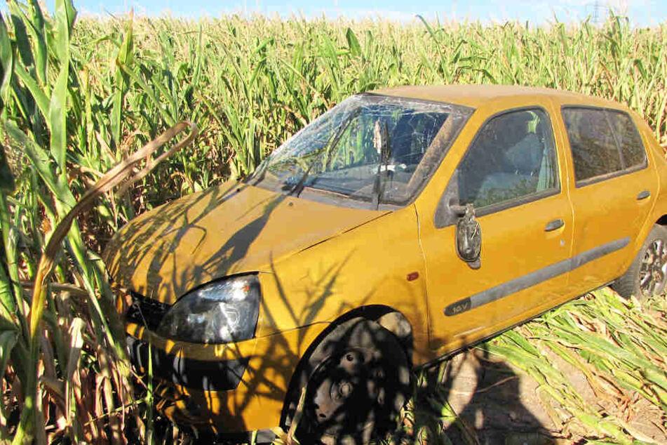Erst in einem Maisfeld kam das Auto zum Stehen.