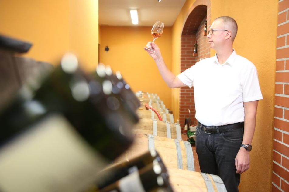 Neuer Skandal! Pilzgift in Sachsen-Weinen entdeckt