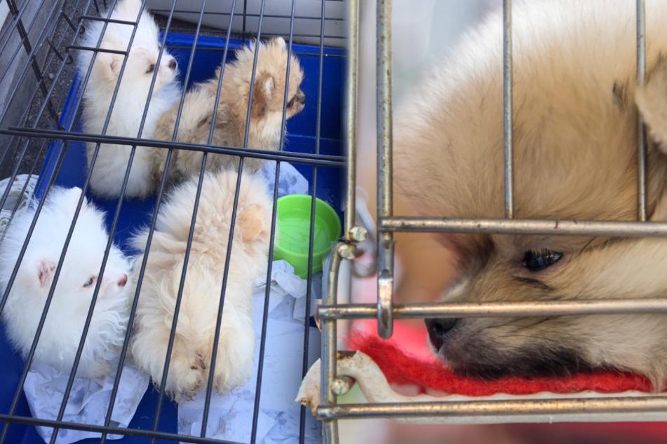 Hundewelpen in Transporter entdeckt, doch das ist nicht alles