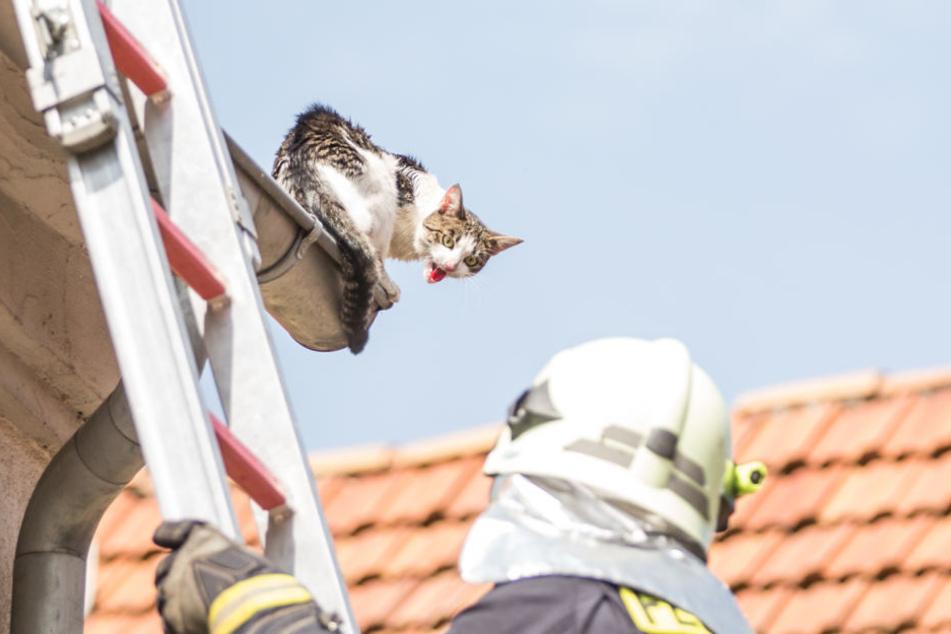 In letzter Sekunde! Feuerwehr rettet Katze bei 30 Grad vom Dach
