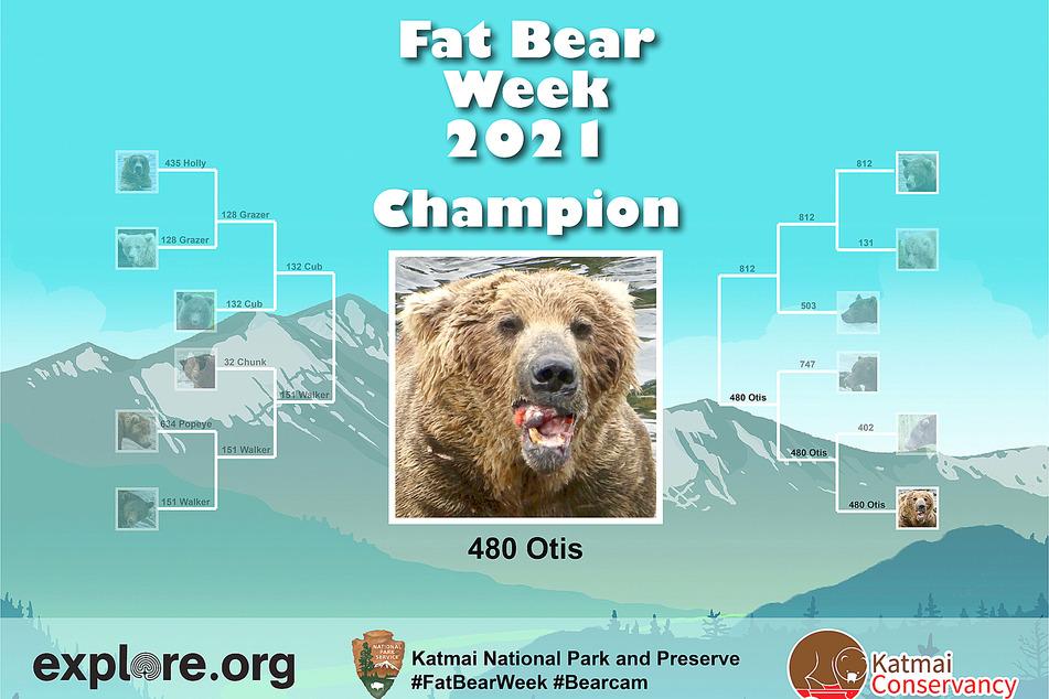 Heavy duty bearing: One-ton Otis wins Alaska fat bear contest