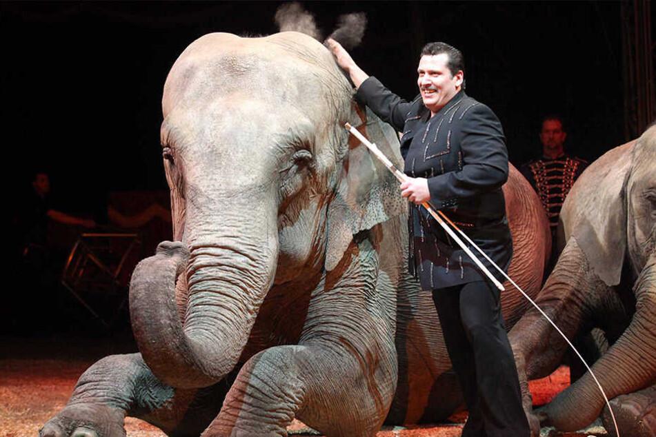 Solche Wildtiernummern wie hier in Löhne im Zirkus Universal Renz sollen in Bielefeld tabu sein.