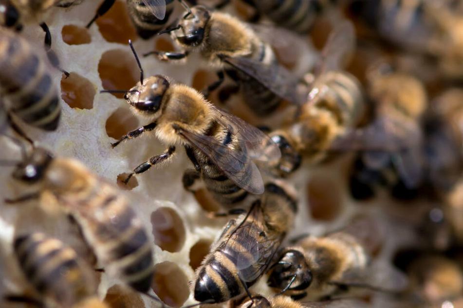 Die Neustadt ist nun Sperrzone für Bienen.
