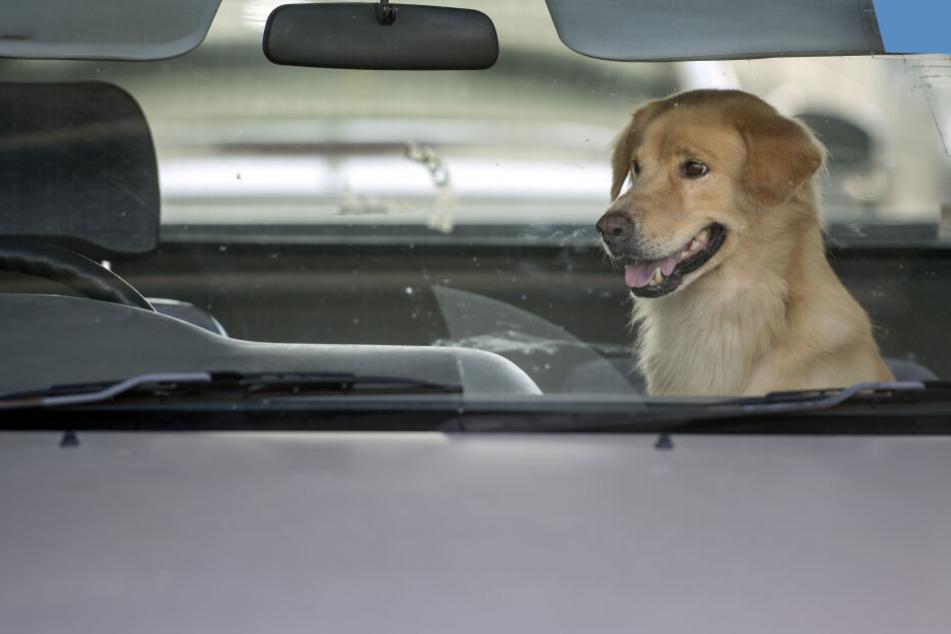 Herzlos zurückgelassen: So lange blieb ein Hund im heißen Auto eingesperrt