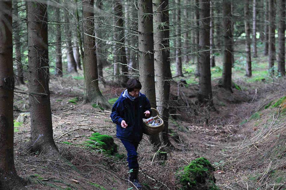 Mehr als sechs Stunden irrten die Frauen im Wald umher (Symbolbild).