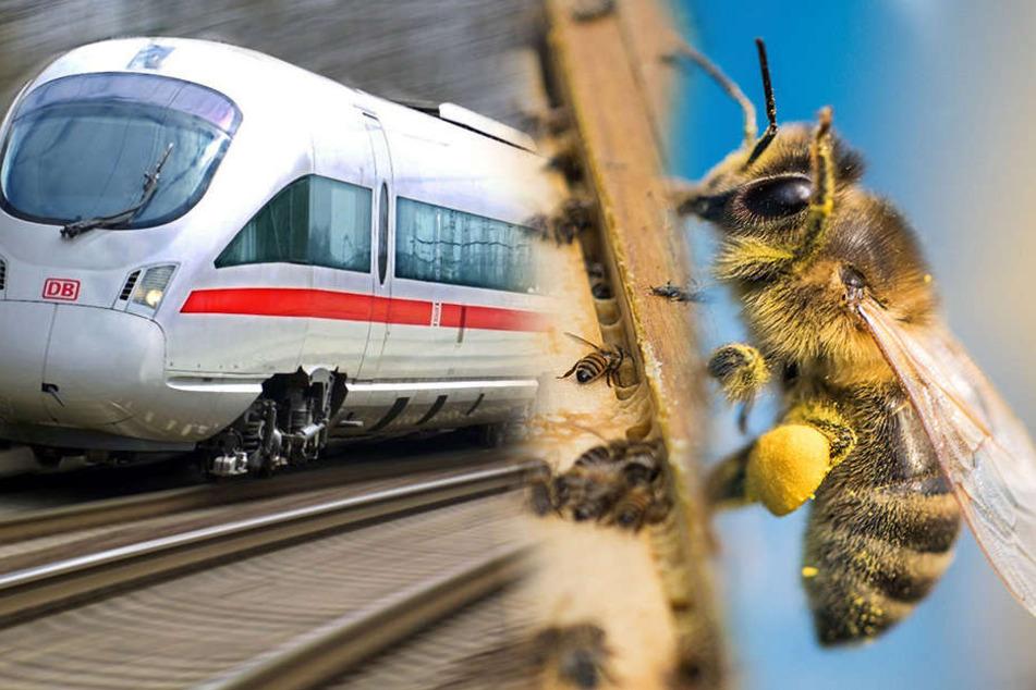 Darum herrscht bei der Deutschen Bahn jetzt Bienenalarm