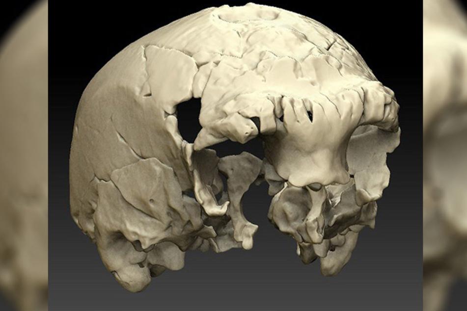Wissenschaftler haben in Portugal einen etwa 400 000 Jahre alten menschlichen Schädel gefunden. Die Grafik zeigt eine Virtuelle Rekonstruktion eines Menschenschädels.