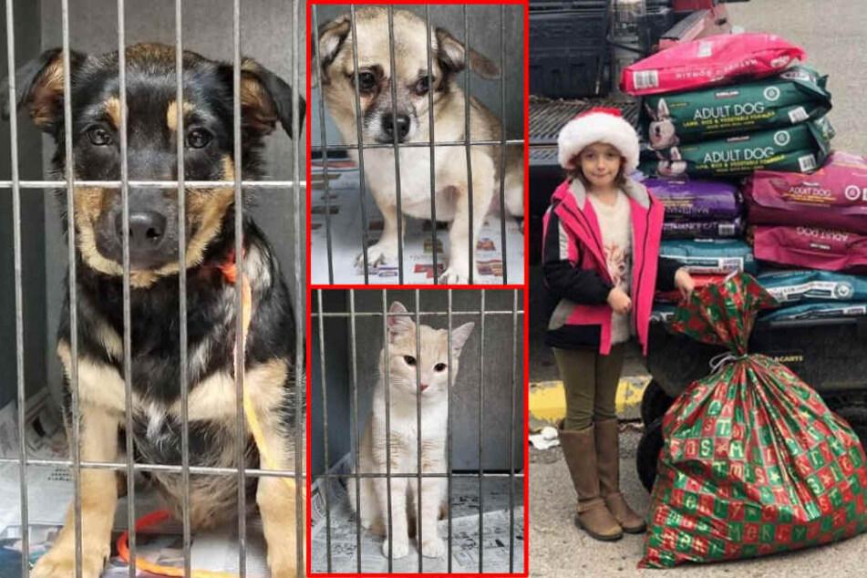 Mädchen (8) verzichtet auf Weihnachtsgeschenke, um obdachlosen Tieren zu helfen!