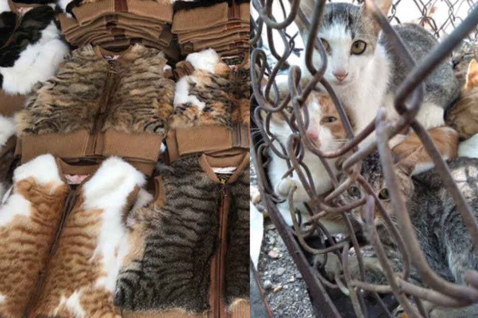 Delikatesse Katzenfleisch: Aktivisten wollen Handel mit den Miezen verbieten