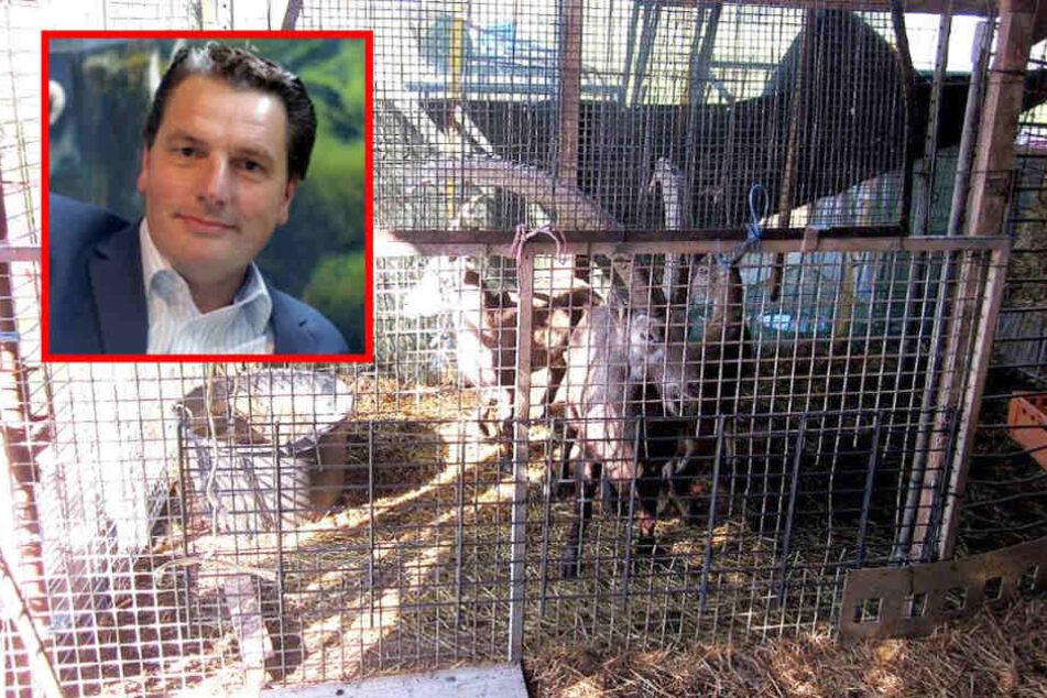 Hat der Zoo-Chef seine Tiere an einen Metzger verkauft?