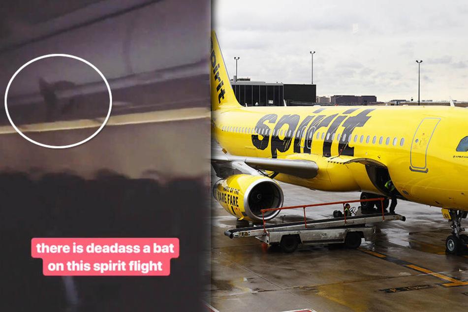Passagiere geschockt: Plötzlich taucht ein seltener Fluggast auf