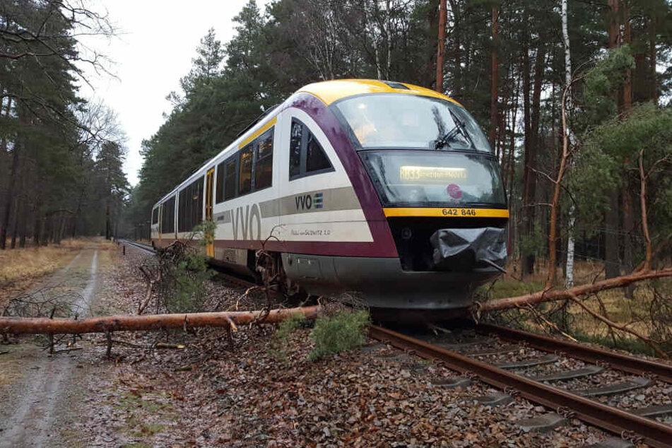 Immer wieder krachen morsche Bäume auf die Gleise, legen den Bahnverkehr lahm.