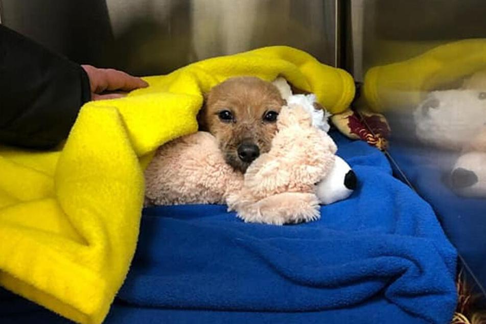In der Tierklinik sorgte man sich rührend um den Hund.