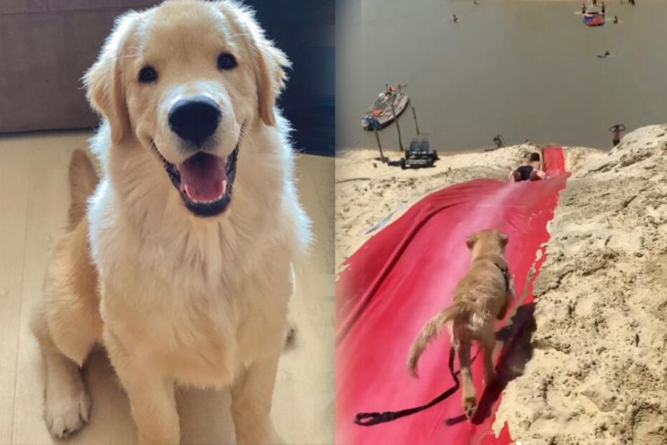 Hund Bento sieht Leute rutschen und kommt auf eine Idee