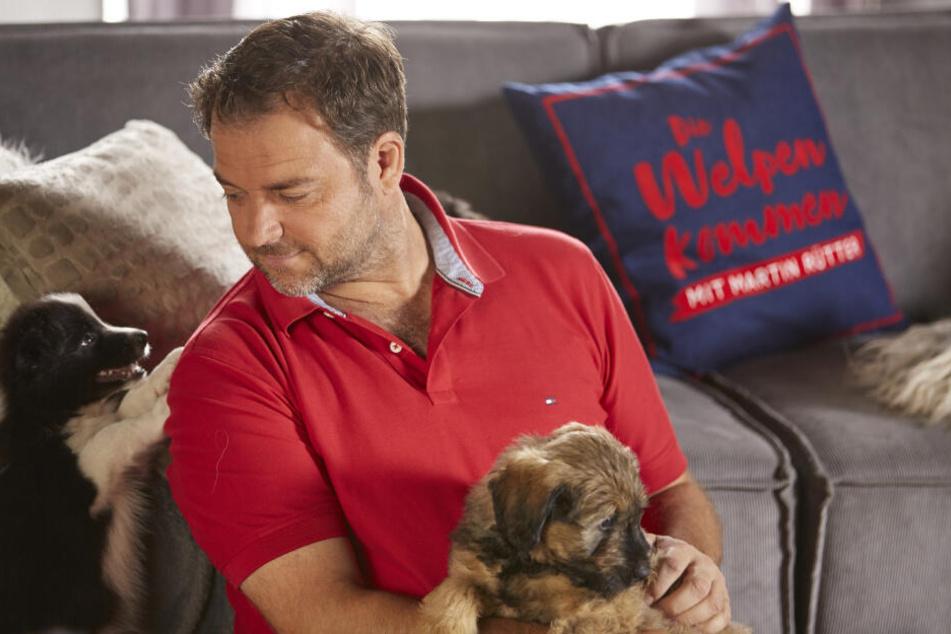 Gibt Tipps bei den ersten gemeinsamen Schritten mit neuen, vierbeinigen Familienmitgliedern: Hundeprofi Martin Rütter (49).