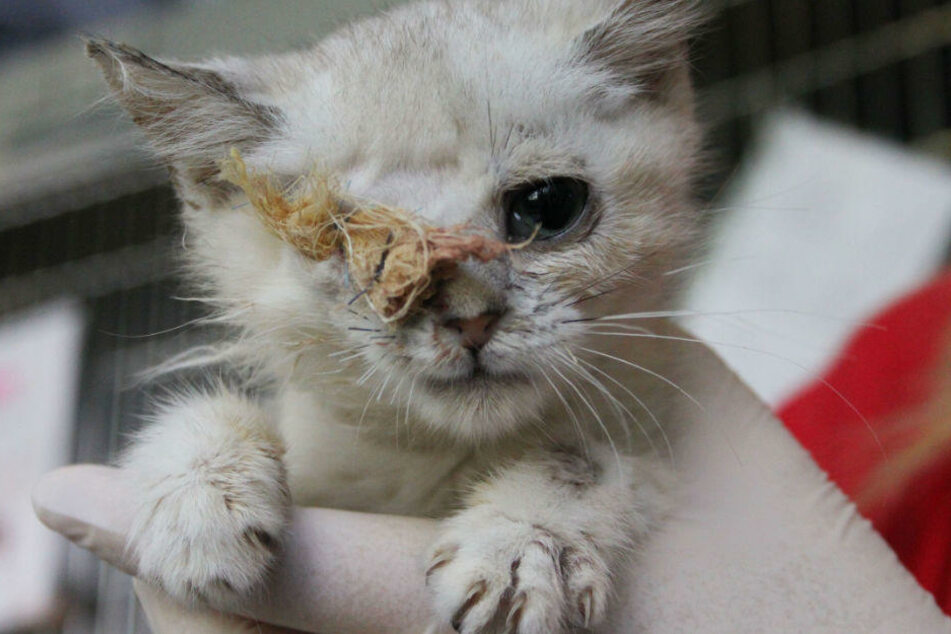 Der kleinen Anastasia musste ein Auge entfernt werden.