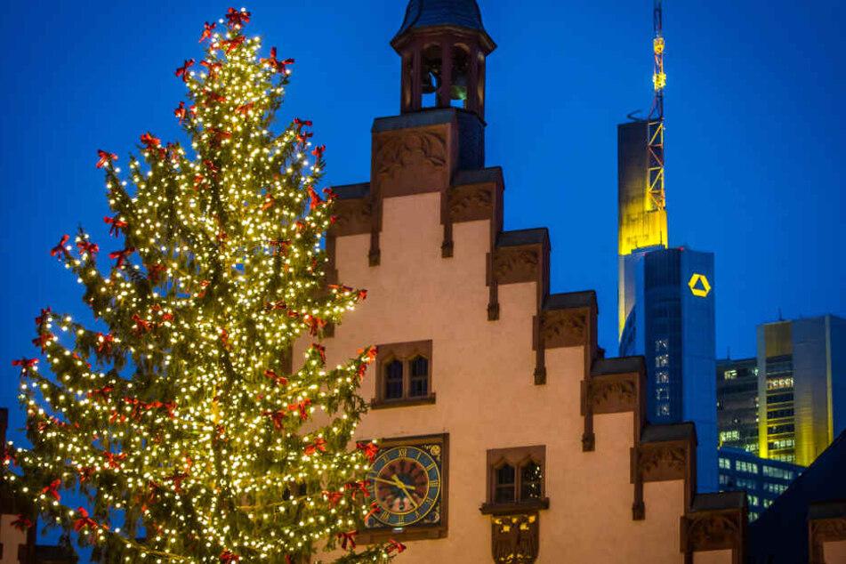 Auch in diesem Jahr wird der Weihnachtsbaum wieder auf dem Frankfurter Römerberg aufgestellt und von tausenden Lichtern zum Leuchten gebracht.