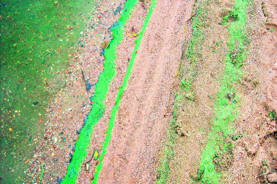 Blaualgen verursachen blau-grüne Schlieren im Wasser und im Uferbereich. Die Bakterien sind gesundheitsschädlich.