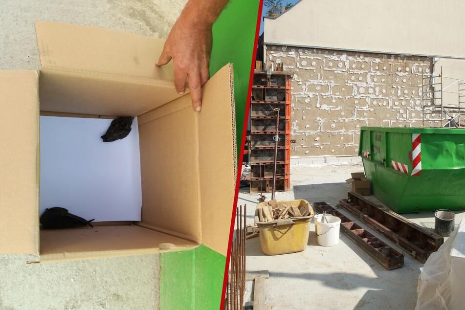 Eine Baustelle wurde für zwei Mauersegler zur lebensgefährlichen Situation.