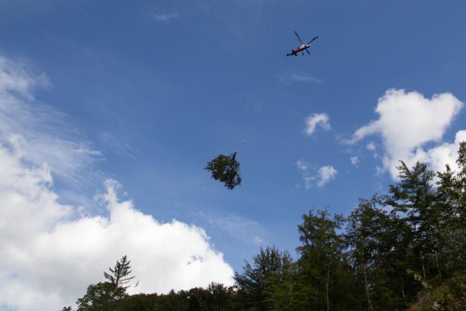 Mit einem Helikopter werden die gefällten Bäume abtransportiert.