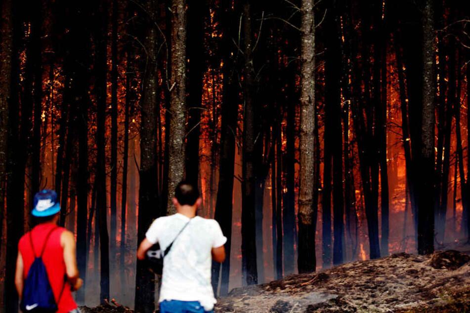 Die verheerenden Brände in Chile haben bereits elf Todesopfer gefordert.