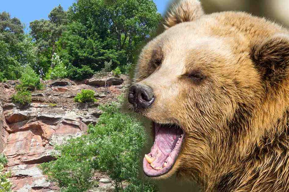 Massenmörder-Bär: Warum seinetwegen 200 Schafe von der Klippe sprangen