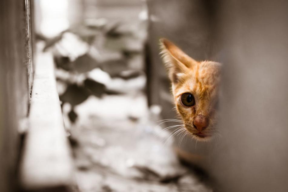 Das Auge der Katze musste entfernt werden. (Symbolbild)