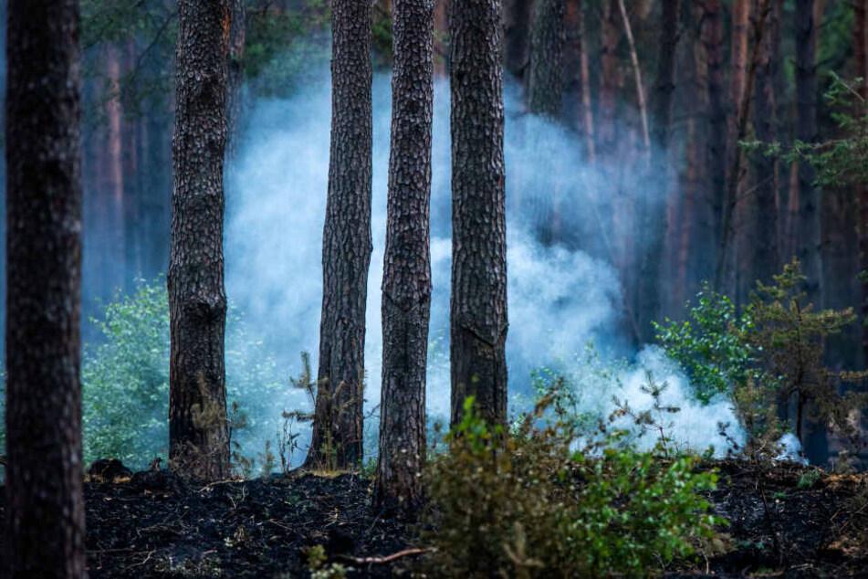 Hitzewelle im Norden: Drohen hier die nächsten Waldbrände?