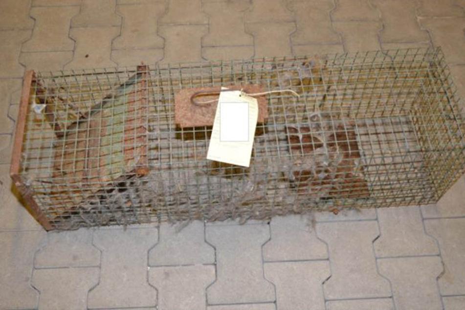 Der Rentner hatte die Katze mit dieser Falle gefangen.