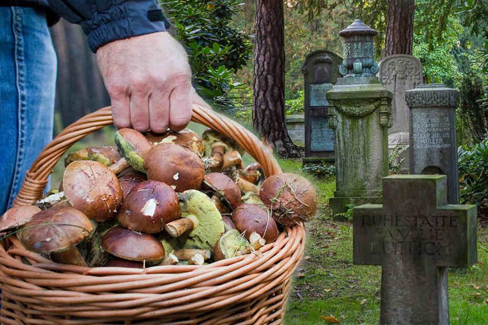 Kein Scherz! So werden Pilzsucher auf den Friedhof gelockt