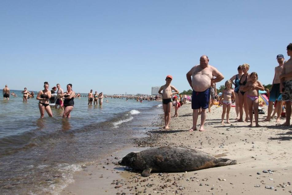 Die Strandbesucher staunten nicht schlecht über den ungewöhnlichen Gast.